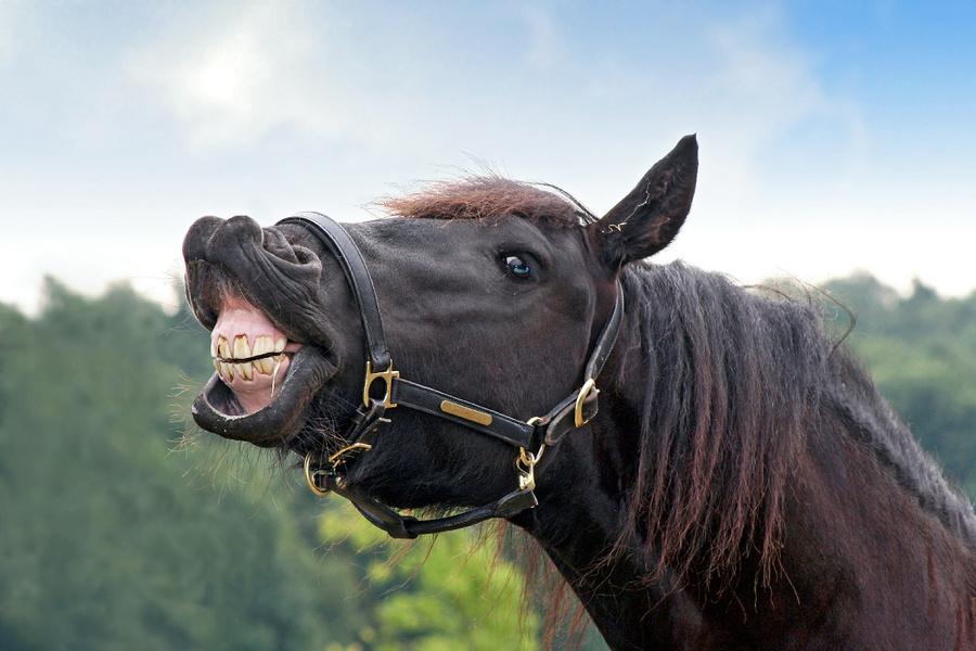 Lachend paard..jpg